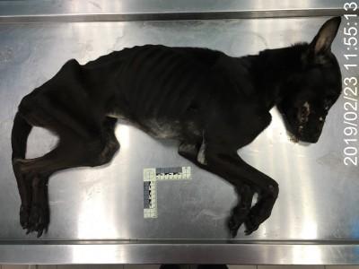 留2犬在空屋活活餓死 飼主觸犯刑法被法辦