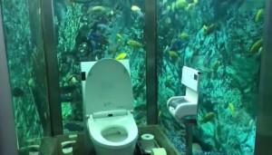 「300隻魚」看你便便!餐廳廁所化身水族館 網友直呼超美