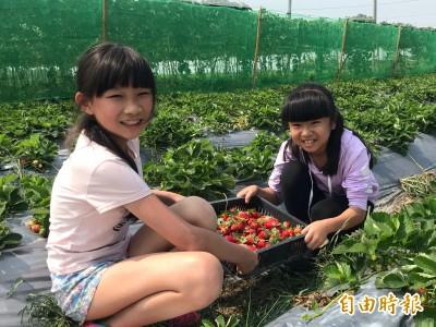 東山國小綠手指 草莓園體驗幸福