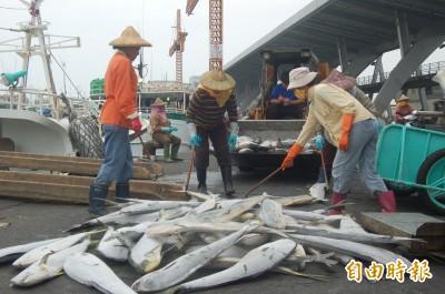 食物「鬼頭刀魚」盛產 黑鮪魚群快到台灣了!
