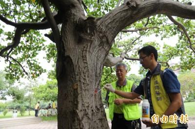 重現生機!興大幫樹「打針」百餘棵病樹康復花更開