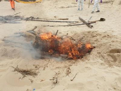 生化炸彈兩天兩起! 金門驗出第4隻非洲豬瘟海漂死豬