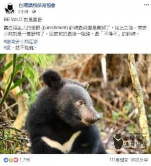 南安小熊即將重返森林 網友:千萬不要接近人類