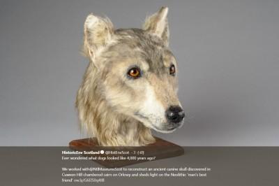 4500年前的狗長這樣!研究人員成功製出3D建模