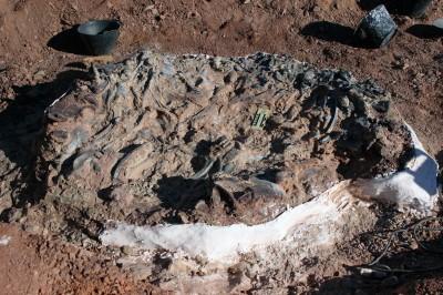阿根廷驚見「恐龍墳場」近10種恐龍葬身於此2.2億年