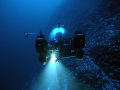 印度洋海溝最深處 科學家拍下前所未見物種身影