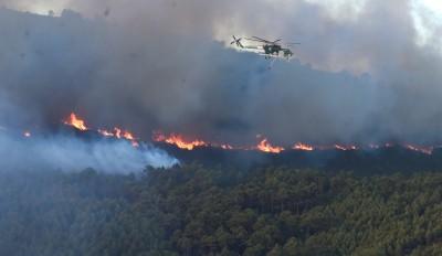 好貴!2學生烤肉釀森林大火 判罰9.3億元