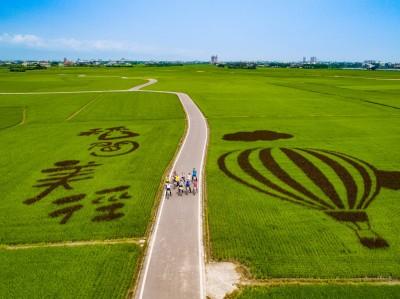 夏天限定美景! 冬山「稻間美徑」設高台俯瞰金黃稻浪