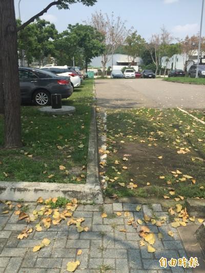 停車場落葉沒人清 烏日人憂下雨易滑倒