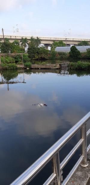嘉義太保一處池塘 驚見浮屍