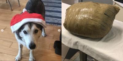 愛犬寄宿寵物旅館 竟被膠帶捆成密封包裹