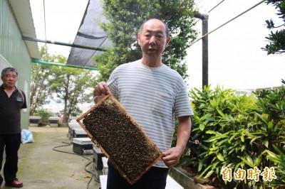 暖冬乾旱不開花 苗栗龍眼、荔枝蜂蜜產量恐掛蛋