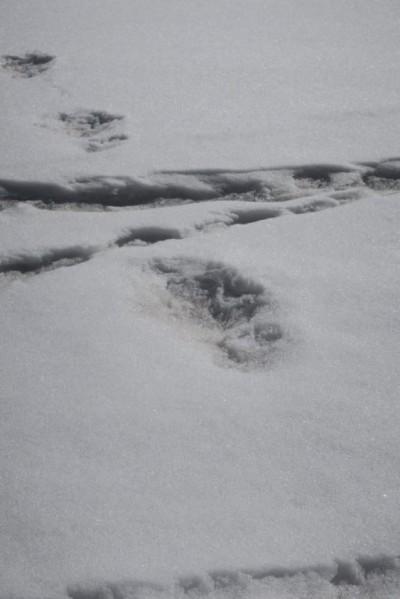 印度軍方登喜馬拉雅山 宣稱發現傳說生物「雪人」足跡