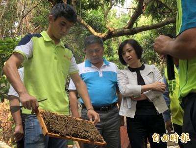 蜂農今年慘賠 農委提供補助度難關