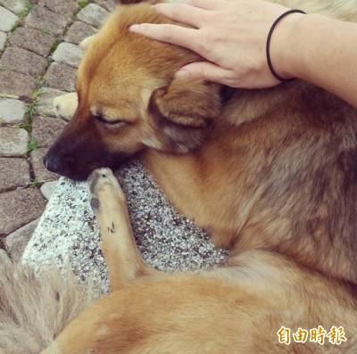 狗是人類好朋友卻非同類好同伴?研究指出「牠們」比狗更無私