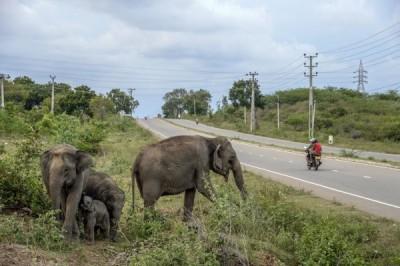 強國女帶兒在保護區小便 慘被大象踢斷腿骨、肋骨
