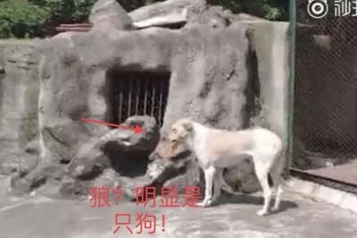 中國動物園「以狗充狼」 園方稱是公狼「女朋友」