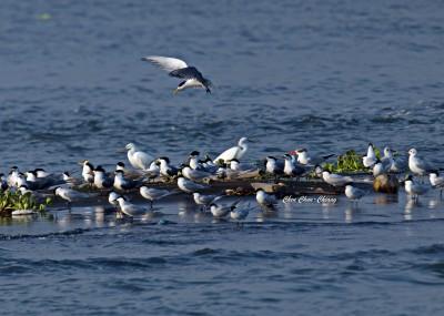 拍合照! 8種候鳥罕見在野外「同框」