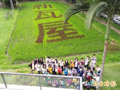 「新瓦屋」紫色彩稻地景藝術 驚豔竹北都會