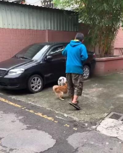 太離譜!男子指使家犬攻擊浪貓 被制止還回嗆三字經