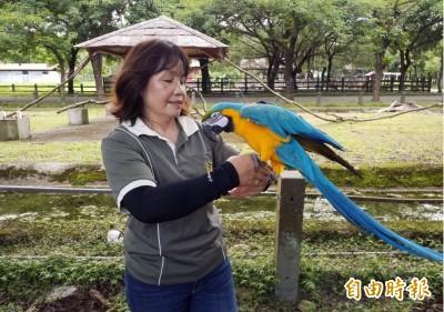 花蓮「鸚鵡媽媽」養百鳥 被叫媽超感動