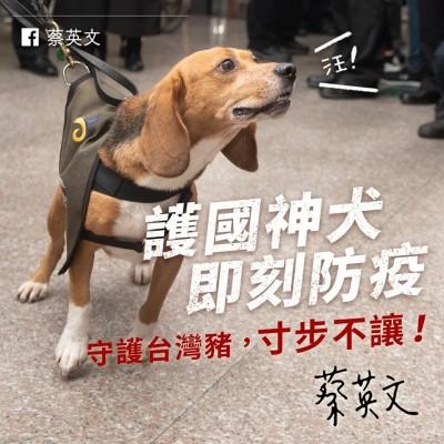 守護台灣豬 蔡英文點名「護國神犬」:寸步不讓!