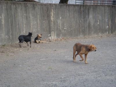 永和山水庫流浪狗橫行 苗栗議員提議訓練工作犬