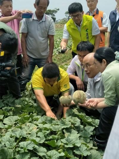 豪雨全台農損逾3000萬 水稻木瓜最嚴重