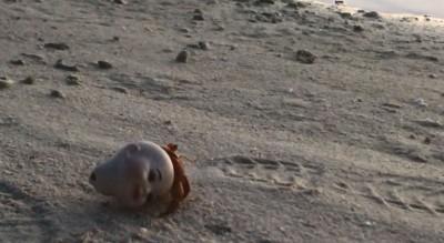 海灘驚見「紅髮嬰兒頭顱」緩緩移動 真相竟是...