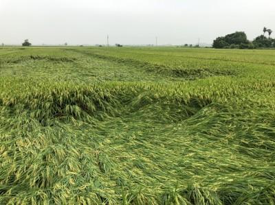 邀專家勘農損 南市農業局:預期稻米質好價揚