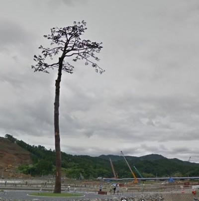 日本聖火傳遞路線 311重建象徵「奇蹟一棵松」入列