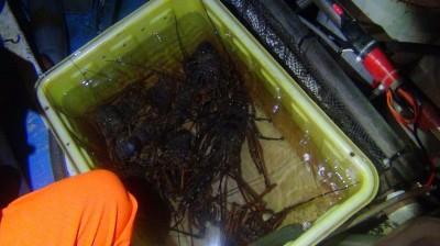龍蝦殺手暗夜潛水違法捕抓 換地方再抓又栽在海巡手上