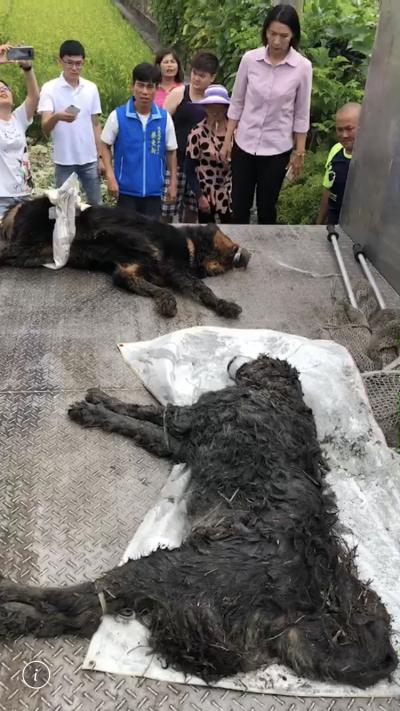 彰化溪湖獒犬咬傷2人 1人要住院