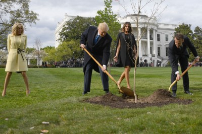 巧合?!美法關係緊張 「情誼之樹」傳死了