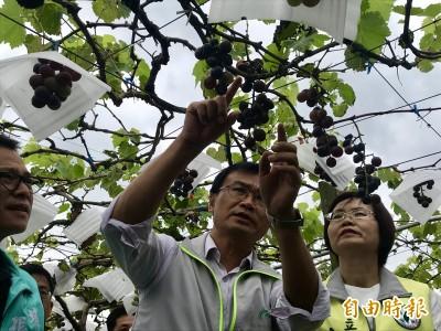 勘災政治學 陳吉仲用這招收服農民的心