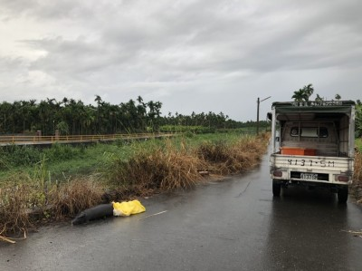好家在!屏東內埔龍井溪遭棄11頭豬屍 排除染非洲豬瘟