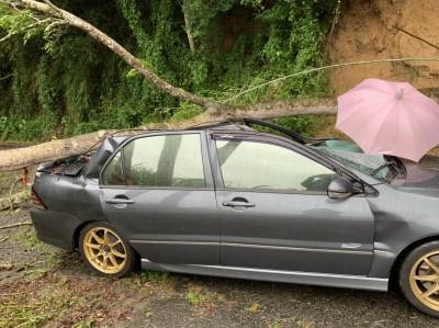 苗栗大雨路樹突倒塌 壓到轎車1人送醫