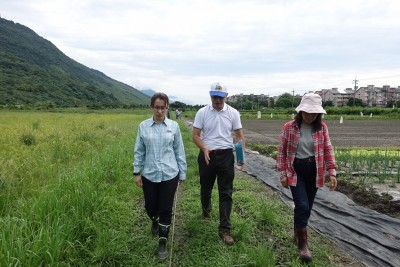 蕭美琴會勘秋行軍蟲防治 壽豐農會促短期補助有機農