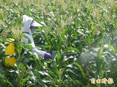 秋行軍蟲金門發現5成蟲 今起進行農藥防治
