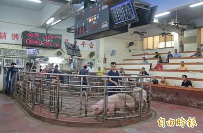 肉粽吃完豬價還在漲 創近5年同期新高