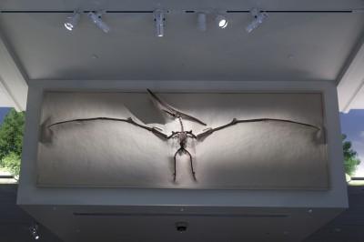 顛覆觀點!最新研究發現 翼龍寶寶一破蛋就會飛