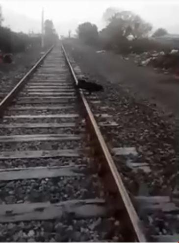 慘忍!行進中火車 驚見狗狗被鍊鐵軌上