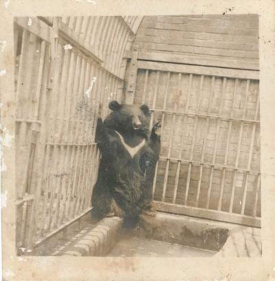 老婦分享「家裡養過很凶的狗」舊照...一看竟是台灣黑熊