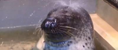 日本連海豹也超養生? 每天至少一小時水柱spa