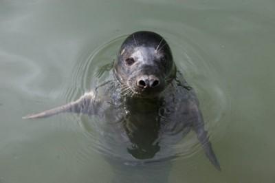 快聽!海豹竟然會唱歌 脫口就是〈一閃一閃亮晶晶〉