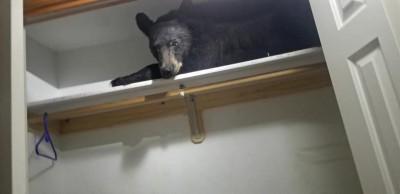 「竊賊」闖空門把自己反鎖 警方到場看呆:是熊熊欸