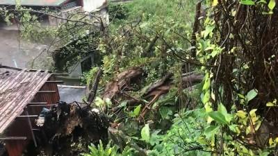 基隆300年老榕樹倒塌 8戶人家無法進出