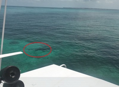 21歲女大生巴哈馬浮潛 遭3頭鯊魚分屍慘死