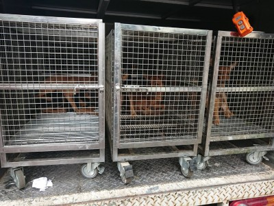 通緝犯被逮入監 留下25隻毛小孩守空房
