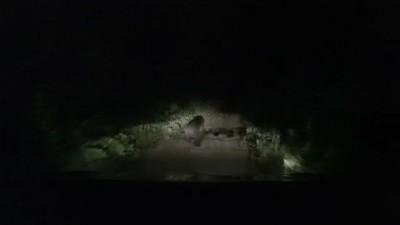 熊熊嚇到片》警察來了 台灣黑熊在林道上跑百米!